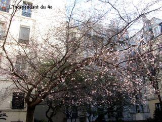 Lindependantdu4e_rue_des_barres_cerisier_IMG_1183