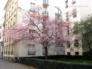 Lindependantdu4e_rue_des_barres_cerisier_IMG_1897