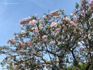 Lindependantdu4e_quai_de_larcheveche_printemps_IMG_2756