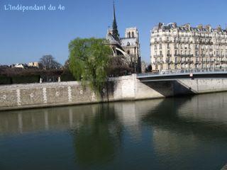 Lindependantdu4e_ile_de_la_cite_saule_pleureur_IMG_1874