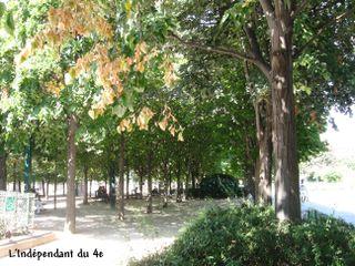 Lindependantdu4e_les_halles_arbres_IMG_2068