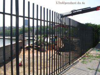 Lindependantdu4e_ile_de_la_cite_saule_pleureur_IMG_7480 copie