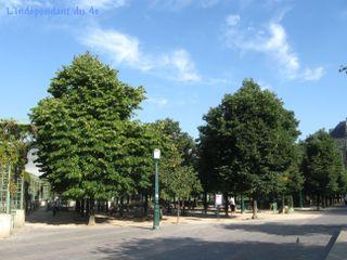 Lindependantdu4e_les_halles_arbres_IMG_2044