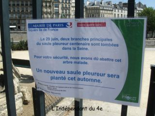 Lindependantdu4e_saule_pleureur_IMG_2159