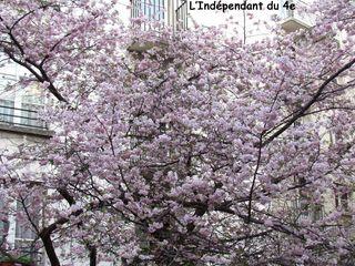 Lindependantdu4e_rue_des_barres_cerisier_IMG_3013