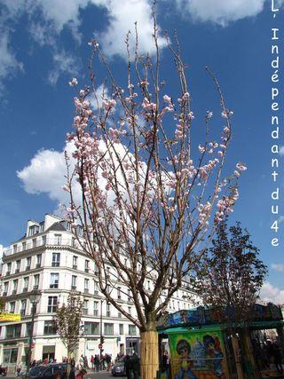 Lindependantdu4e_terre_plein_saint_paul_IMG_3375
