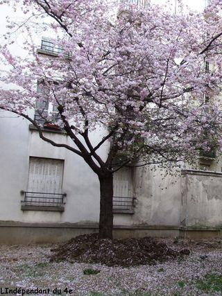Lindependantdu4e_rue_des_barres_cerisier_IMG_3012