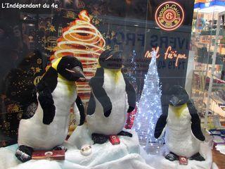 Lindependantdu4e_pingouins_IMG_1686