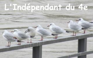 Lindependantdu4e_mouettes_IMG_2778
