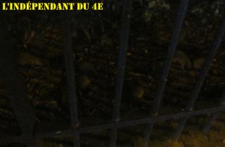 Lindependantdu4e_rats_IMG_7470