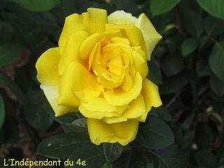 Lindependantdu4e_jardin_nueve_IMG_1698