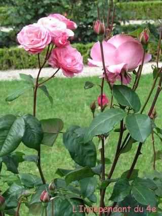 Lindependantdu4e_jardin_nueve_IMG_1691