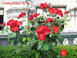 Lindependantdu4e_jardin_nueve_IMG_1696